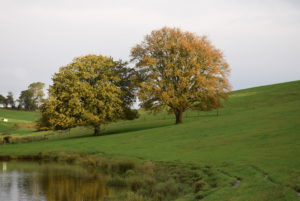 Oak trees in late autumn